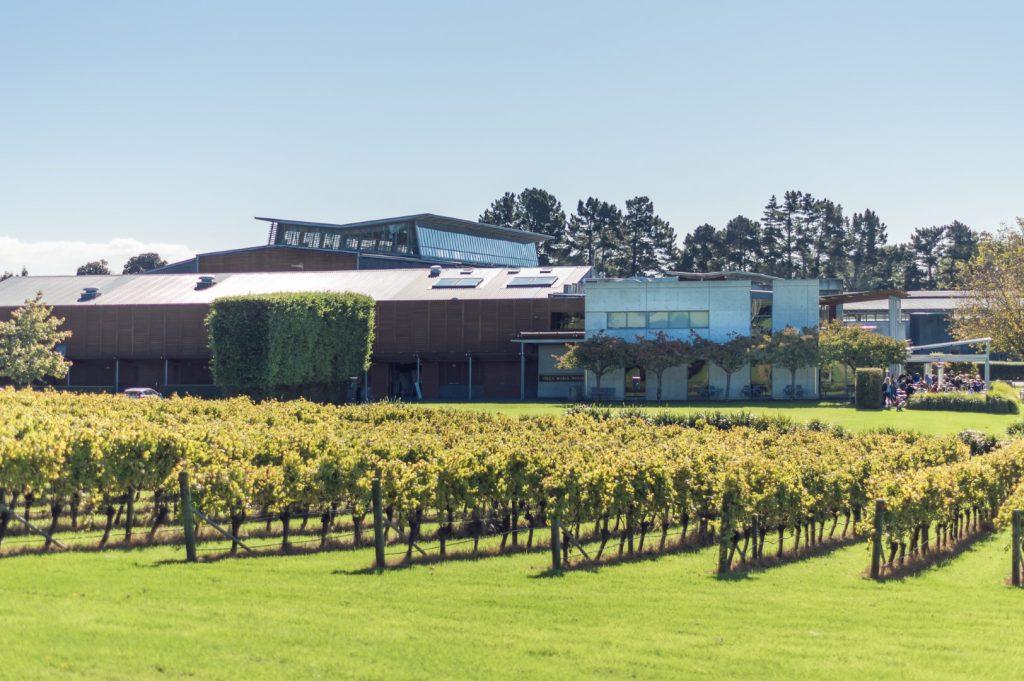 Villa Maria winery grapes